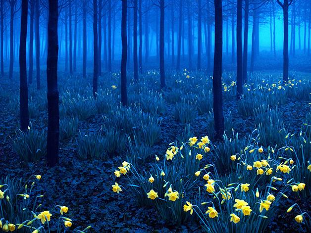 Floresta-Negra-Alemanha