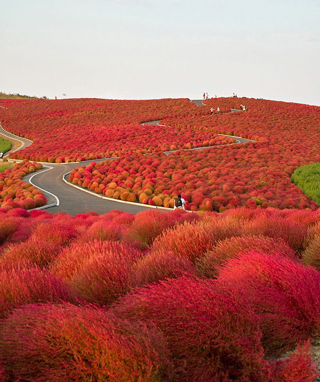 Hitachi-Seaside-Park-Japão