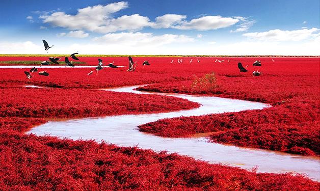Praia-vermelha-Panjin-China