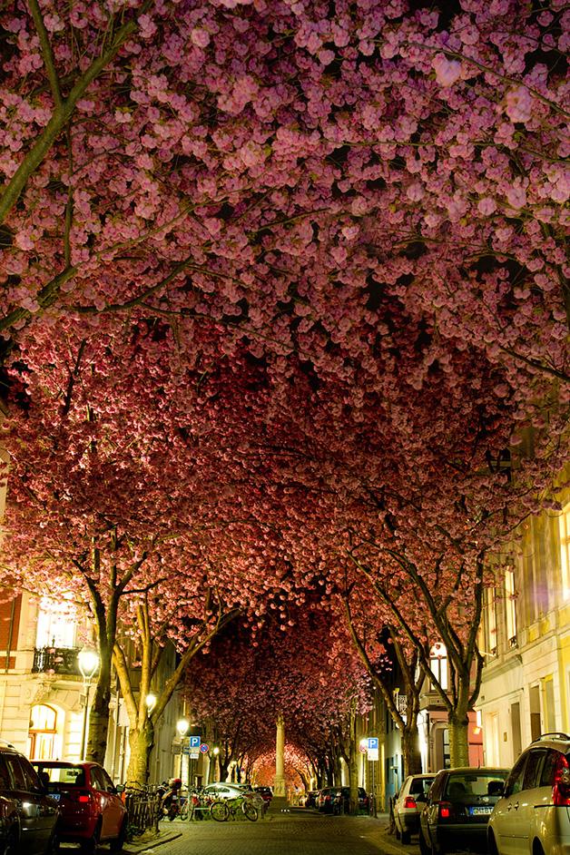 Rua-em-Bonn-Alemanha