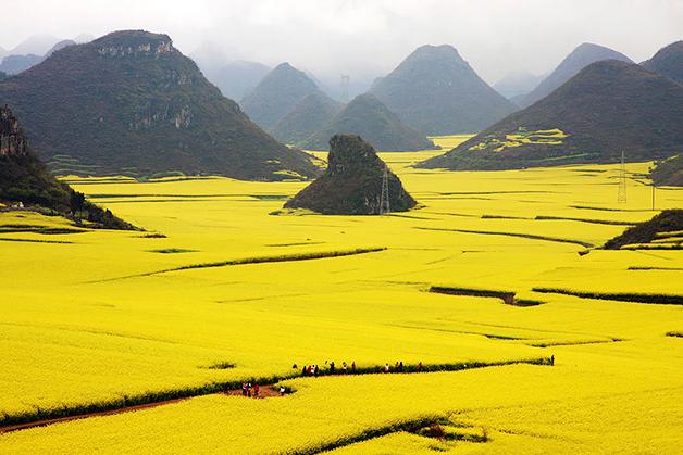 Campo-de-flor-de-canola-China