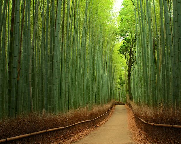 Floresta-de-bambu-Japao